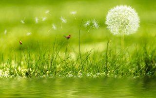 loslaten, mediteren, hulp, stress, therapie